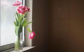 Картинка цветы, лепестки, листья
