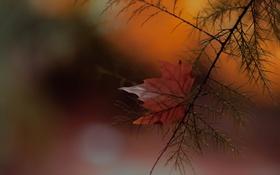 Картинка осень, лист, ветка