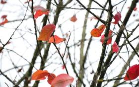 Обои ветки, листья, небо, осень