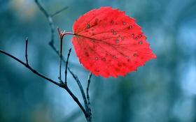 Картинка осень, природа, лист, ветка, багрянец