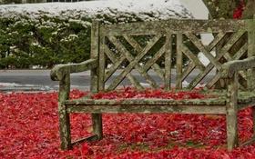 Картинка осень, улица, скамья