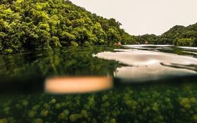 Картинка поверхность, озеро, медузы, подводное плавание