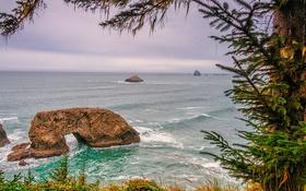 Обои арка, берег, скалы, дерево, море