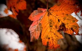 Картинка природа, фон, осень, листья, цвет