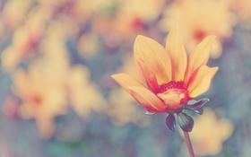 Картинка бутон, стебель, лепестки, светлый, цветок