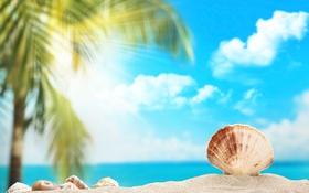 Обои песок, пальма, ракушка