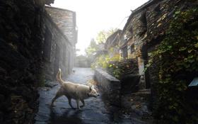 Картинка город, улица, собака