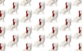 Картинка белый котенок, Новый год, текстура, настроение, колпак, котёнок, фон