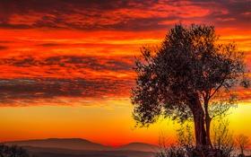 Картинка облака, горы, зарево, небо, дерево