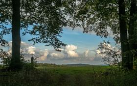 Обои небо, трава, облака, деревья, ветки, вид, Германия