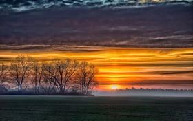 Обои поле, закат, природа, туман, восход, фото, дерево