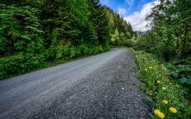 Обои Juneau, трава, лес, одуванчики, деревья, дорога, Джуно