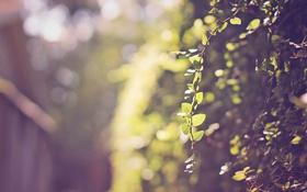 Обои лето, листья, веточка, ветка, зеленые