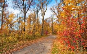 Картинка дорога, деревья, парк, осень, листья