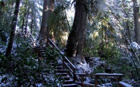 Обои лес, снег, деревья, ветки, парк, Канада, лестница