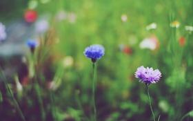 Картинка цветы, синий, сиреневый, лепестки, лиловый