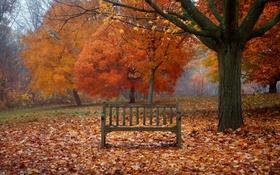 Обои осень, листья, деревья, ветки, туман, птица, листва