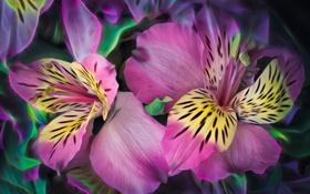 Обои лепестки, растение, природа, цветы