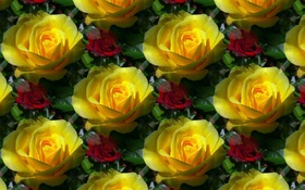 Картинка цветок, фон, роза, текстура