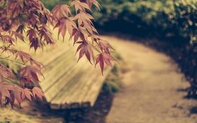 Картинка скамья, парк, город, листья, осень