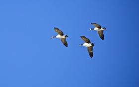 Картинка птицы, небо, полёт