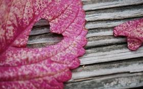 Обои макро, лист, фото, доски, сердечко