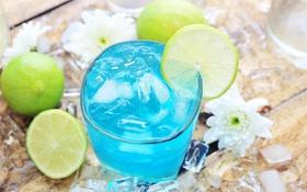 Картинка лед, коктейль, лайм, веток, хризантема