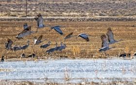 Картинка природа, аисты, озеро, птицы