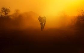 Обои закат, пыль, слон, небо, природа