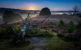Обои дерево, ночь, туман