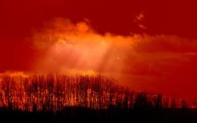 Картинка небо, облака, лучи, свет, деревья, силуэт