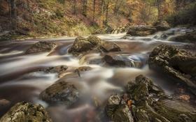 Обои поток, лес, река, вода, природа