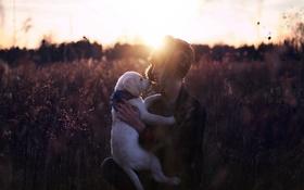 Картинка закат, человек, собака