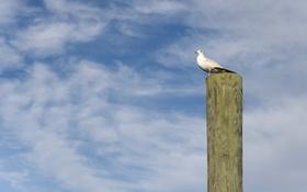 Картинка небо, фон, птица