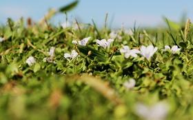 Обои листья, цветы, лепестки, зеленые, белые