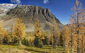 Обои осень, деревья, горы, Канада, Альберта, temple mountain