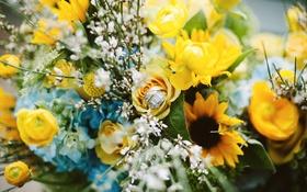 Обои цветы, букет, кольца