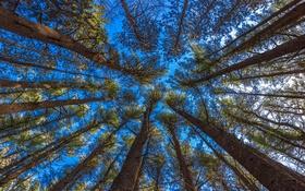 Обои небо, деревья, ствол