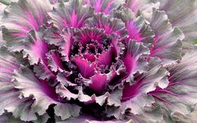 Обои цвет, растение, природа, листья