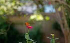Картинка цветок, бабочка, сад, стебель, насекомое