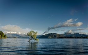 Картинка вода, горы, река, дерево
