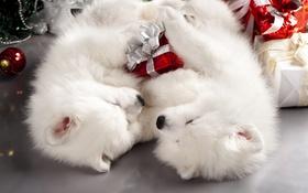 Обои мило, новый год, коробки, пара, щенки, белые, спят