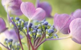 Обои лепестки, цветок, растение