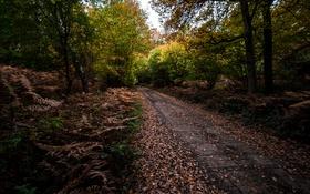 Обои дорога, осень, природа