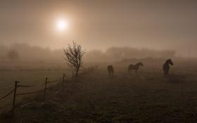 Обои поле, ночь, кони