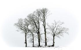 Обои зима, деревья, природа
