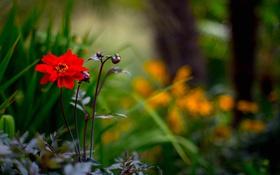 Обои лес, цветок, трава, парк, лепестки, стебель