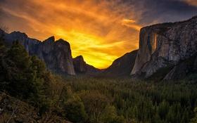 Обои лес, горы, forest, mountains, orange sky, оранжевое небо