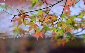 Обои ветка, пасмурно, листья, осень