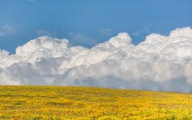 Картинка поле, небо, облака, цветы
